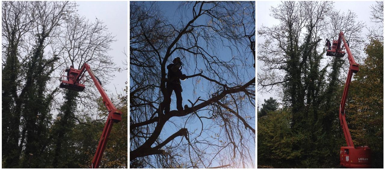 abattage, élagage, arbres, normandie