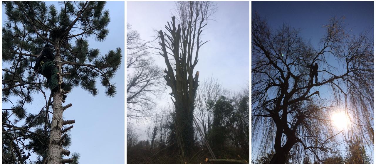 abattage, élagage arbres, orne, normandie
